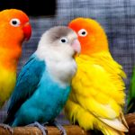 Colorful parakeets