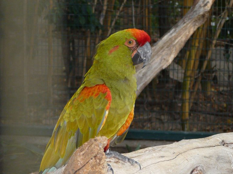 red and green exotic macaw