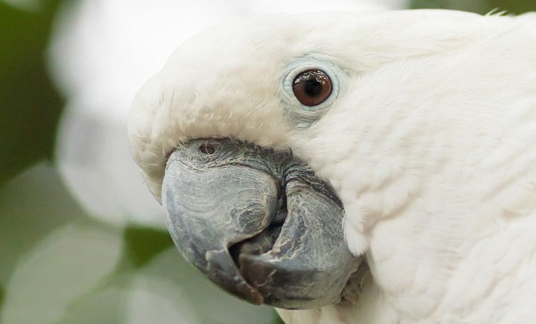 bird ill