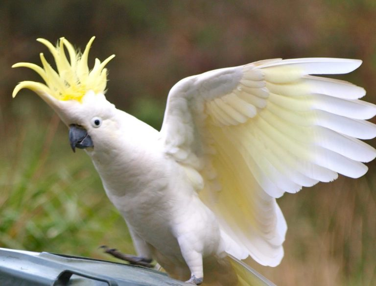 white exotic bird