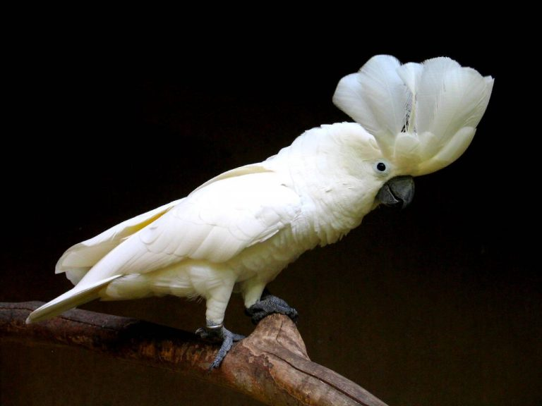 posssing white bird