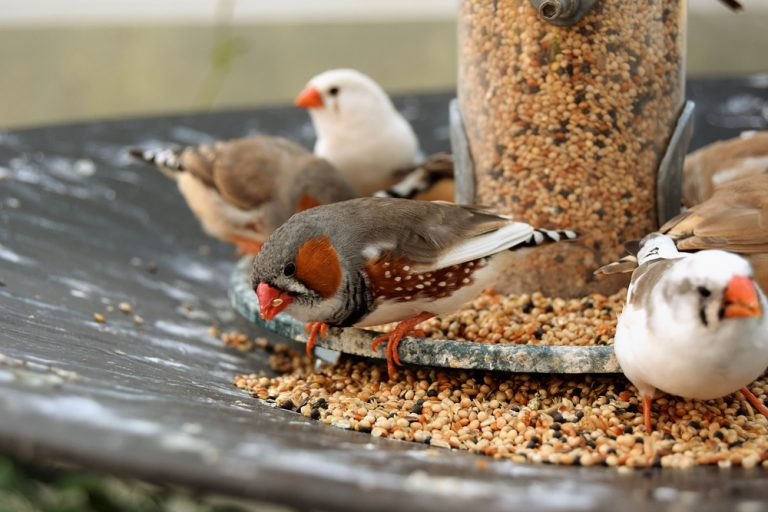 finches eating