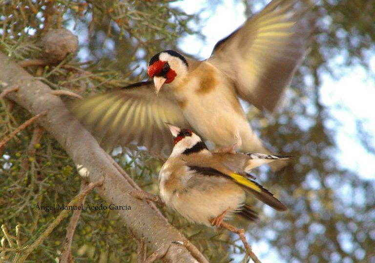 bird exotic