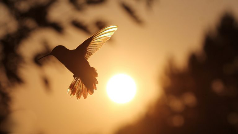 sunrise humming bird