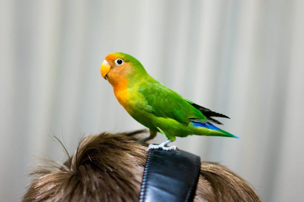 bird in the head
