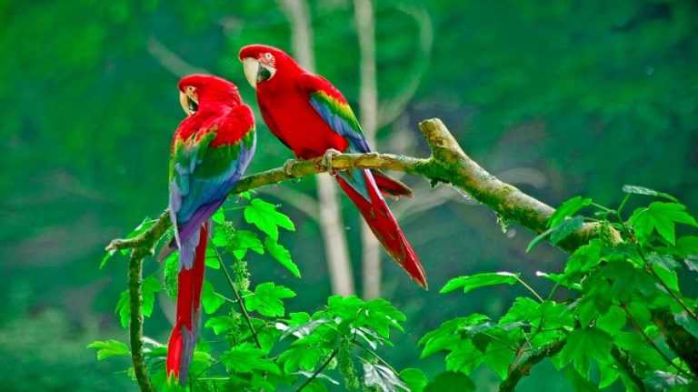 natural macaws