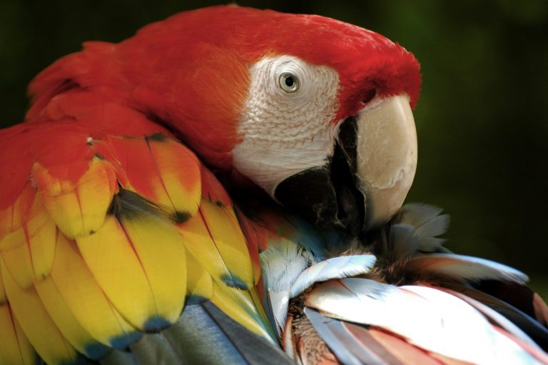 exotic macaw