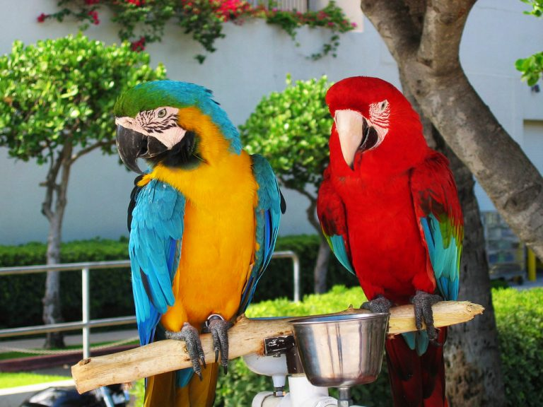 an others macaws birds