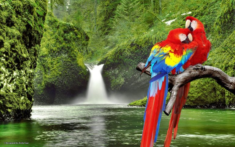 birds with waterfall