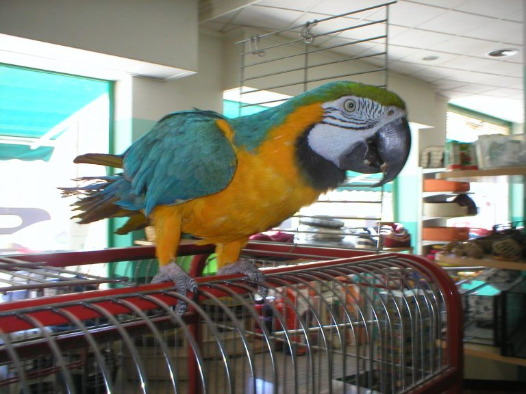 macaw bird in a pet