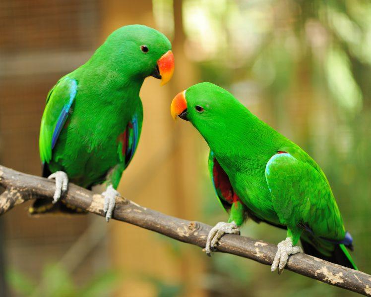 parrots looking