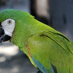 parrot destacada