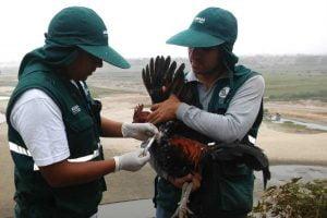 Aprende todo sobre histomonas meleagridis, enfermedad en aves