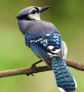 keep birds away