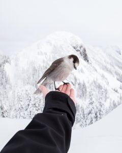 tame a bird