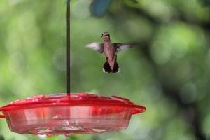 Keep Ants off Hummingbird Feeder