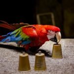 Which are the Smartest Parrots?