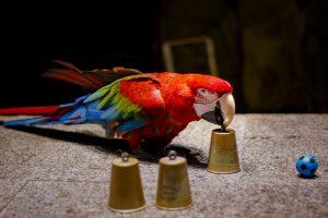 smartest parrot