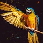 Top 8 Largest Parrots
