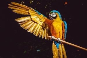 largest parrots
