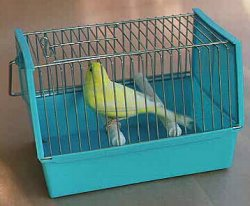 Canary in Carrying Cage