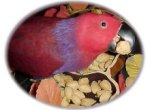 Seeds And Nuts: Nutrition Varies By Method Served