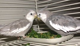 Help! My Bird Won'T Eat Vegetables!: Getting Your Bird Addicted To The Good Stuff