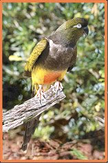 Metal Poisoning: It Almost Killed Our Patagonian Conure