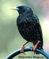 Why Do Wild Birds Sing In Autumn?