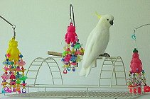 Are Plastic Bird Toys Safe For Parrots?