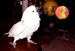 It's Playtime: Games To Play With Your Parrots