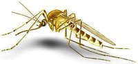 Mosquitoes - Control & Protection: Preventing West Nile Virus
