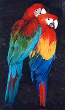 Selecting A New Macaw