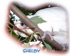 Parenting Our Birds: Shelby's Story